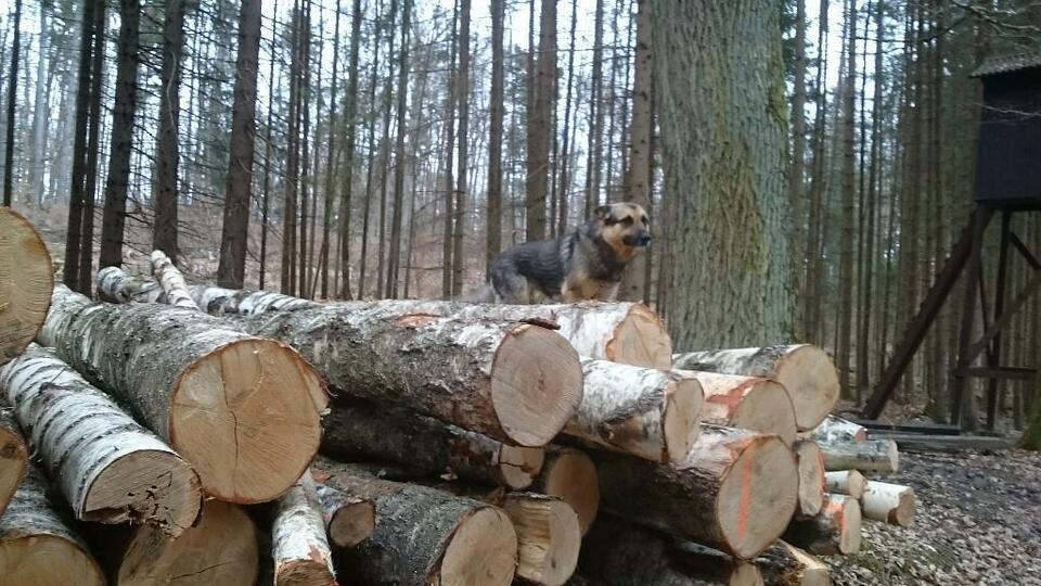buche fichte birke stammholz brennholz in bayern thyrnau ebay kleinanzeigen