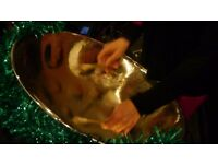 Steel Band Available for your Christmas Party - Steel Pan Caribbean Music!