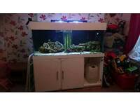 5 ft tank with cabinet and sump and v2 illumaniaire