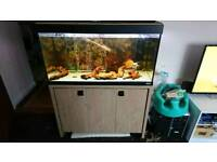3ft fluval fish tank, stand and fish
