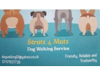 Dog Walking/Pet Care (We also cover domestic cleaning)