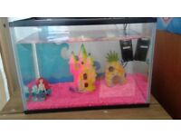 Beautiful Paradise Fish Tank with Barbie and Popstar wanting a new home.