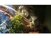 Rehomeing Iguanas and Tortious................ our reptile house has room to help you out..