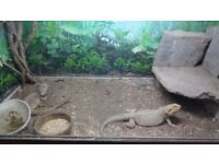 snake and reptile vivs and tanks