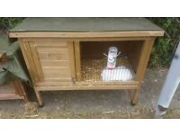 White baby rabbit and hutch