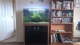 130 L aquarium with fish and living plants