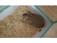 Rabbit and cage for sale