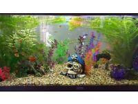 Juwel Fish Tank, Full Set Up and Fish