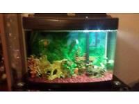 fish tank+fish full set up