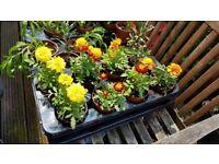 Plants/flowers/hanging basket/window bixes