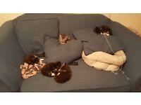 Lovely kittens need re homing in cat loving homes. Litter trained, outside space garden preffered.