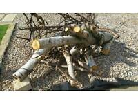 Free wood silver birch logs uplift from stirling for wood burning stove