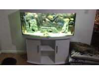 White gloss fish tank