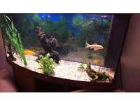 Jewel 180L fish tank and stand