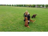 Tanya's Happy Hounds.(Dog sitter, dog sitting, dog walker, dog walking or dog daycare, dog boarder)