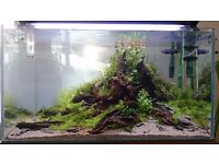 Offer 3' aquarium (90 cm) + WavePoint Luminary + cabinet
