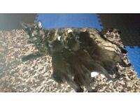 5 Beautiful Kittens for sale in Romford, London