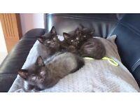Kittens ready for forever home