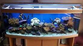 Marine Live Rock Corals Fish Sand equipment