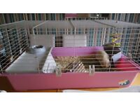 2 male guinea pigs with complete set up