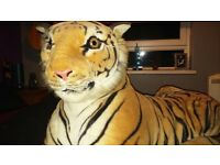 Adult Fluffy Tiger!