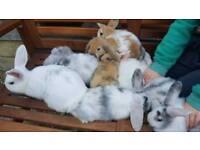 Pet baby rabbits