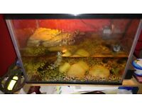 Male turtle and tank set up