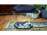 beautiful fish tank with cleaner pump ston size l 40 cm w 20 cm h 46 cm is ready to use