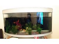 Large Fish tank with filter air pump and everything in it