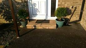 Box Hedge x2(Buxus sempervirens ball)