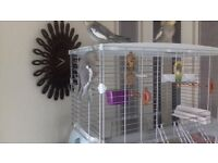 vision bird cage, and 2 female cockatiels aged 4 months selleing all for 120 pounds