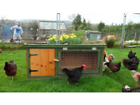 rabbit ?guinea pig hutch for sale