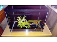 2ft fish tank with heater and filter