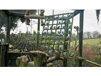 Budgies for Sale.Various colours, males & femails. Includes a large aviary and nesting shed etc.