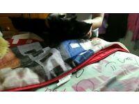 4 black kittens