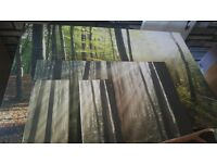 3 forest canvasses