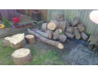Tree stumps and logs