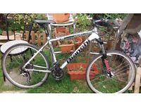 Bianchi italian mountain bike for sale