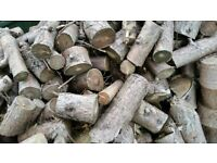 LOGS SOLID FUEL WOOD LARGE JOB LOT STANDING 3YRS COLLECTION! WISHAW SUTTON TODAY 20TH ONLY