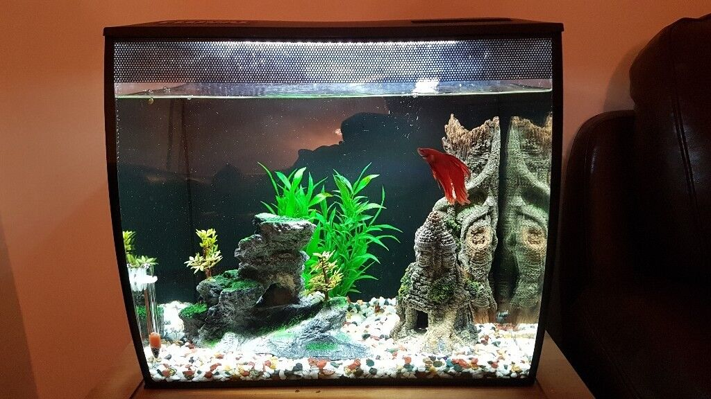 Fluval Flex 57l Complete Set Up With Accessories In Stoke On Trent Staffordshire Gumtree