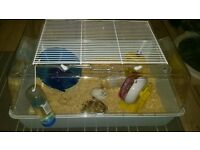 roborowski hamsters for sale