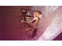 Female tortie cat