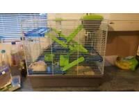 female Syrian hamster