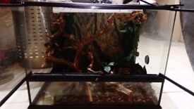 large reptile, snake tank all accessories