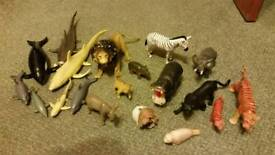 ELC animals