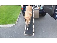 Folding Wooden Slatted Ramp with Fitted Non Slip Carpet