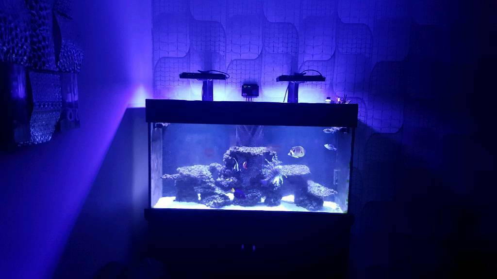 Aquaone reef 400 with cabinet and sump