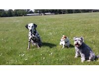 Small and reliable dog walker based in the west end of Aberdeen