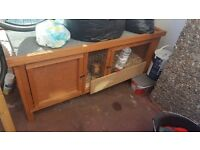 Male guinea pig with hutch