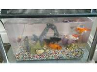 Small plastic fish tank with 4 gold fish